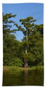Atchafalaya Basin 41 Beach Towel