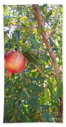 Aunt Tissy's Pomegranate Tree  Beach Towel