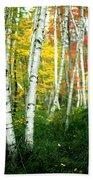 Autumn Birch Grove Beach Towel
