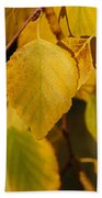 Autumn Birch In Southern Oregon Beach Towel