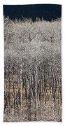 Autumn Birches Beach Towel