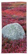 Autumn Blueberry Field Beach Towel