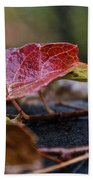 Autumn Ivy In Red Beach Towel