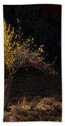 Autumn Light Beach Towel by Mike  Dawson