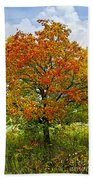 Autumn Maple Tree Beach Towel
