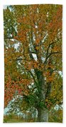 Autumn Sweetgum Tree Beach Towel