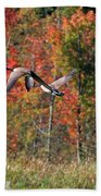 Autumn Vermont Geese And Color Beach Towel