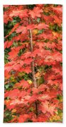 Autumnal Acer Beach Towel