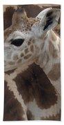 Baby Rothschild Giraffe  Beach Towel