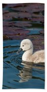 Baby Swan Beach Towel
