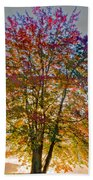 Backlit Maple In Autumn's Light Beach Towel