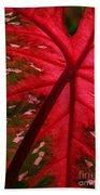 Backlit Red Leaf Beach Towel