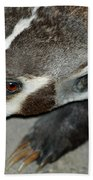 Badger On The Loose Beach Towel