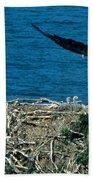 Bald Eagle And Chicks Beach Towel
