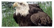 Bald Eagle At Riverside  Beach Towel