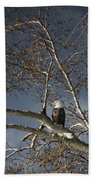 Bald Eagle In A Tree Beach Towel