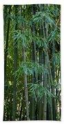 Bamboo Tree Beach Towel by Athena Mckinzie