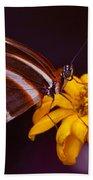 Banded Orange Heliconian Dryadula Phaetusa Beach Sheet