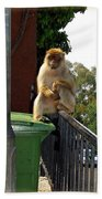 Barbary Ape Beach Towel