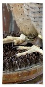 Barbary Falcon Feet Beach Towel