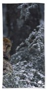Barbary Macaque Male With Infant Beach Towel
