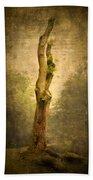 Bare Tree Beach Towel by Svetlana Sewell