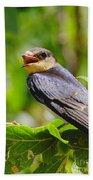 Barn Swallow In Sunlight Beach Towel