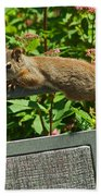 Basking Squirrel Beach Towel