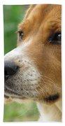 Beagle Gaze Beach Sheet