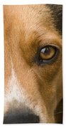 Beagle Hound Dog Eyes Of Love Beach Towel