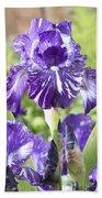 Bearded Iris Iris Germanica Batik Beach Towel