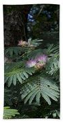 Beautiful Alabama Mimosa Silk Tree Beach Towel