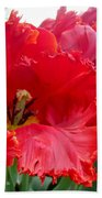 Beautiful From Inside And Out - Parrot Tulips In Philadelphia Beach Towel