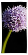 Beautiful Purple Flower With Black Background Beach Towel