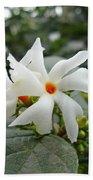 Beautiful White Flower With Orange Center Beach Towel