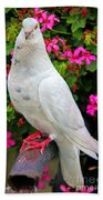 Beautiful White Pigeon Beach Towel