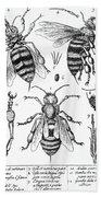 Bee Anatomy Historical Illustration Beach Towel