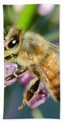 Bee On A Flower Beach Towel