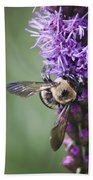Bee On Gayfeather Squared 2 Beach Towel