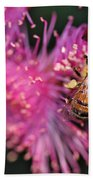 Bee On Lollypop Blossom Beach Towel