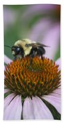 Bee Resting Squared Beach Towel