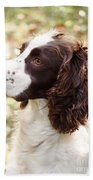 Before The Hunt - English Springer Spaniel Beach Towel