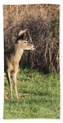 Being Aware - Deer Beach Towel