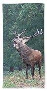 Bellowing Red Deer Stag Beach Towel