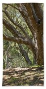 Bench And Tree In Cambria II Beach Towel