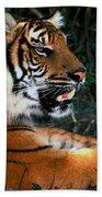 Bengal Tiger - Teeth Beach Towel