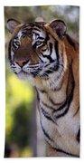 Bengal Tiger Beach Sheet