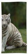 Bengal Tiger Panthera Tigris Tigris Beach Sheet