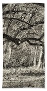 Bent Trees Sepia Toned Beach Towel