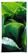 Big Green Cabbage Beach Towel
